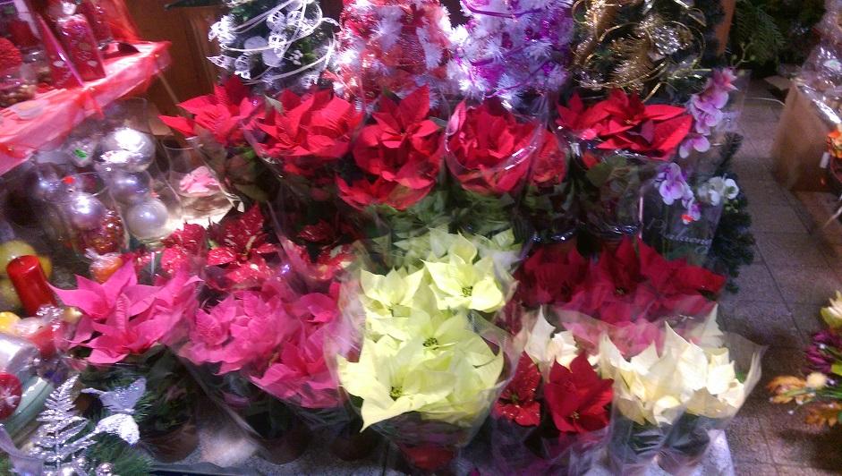 kwiaciarnia_18